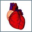Лечение травами заболеваний сердечных и кроветворных