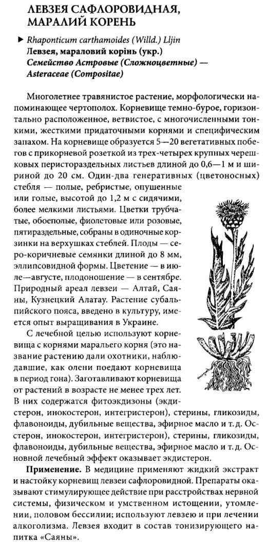 Левзея сафловидная