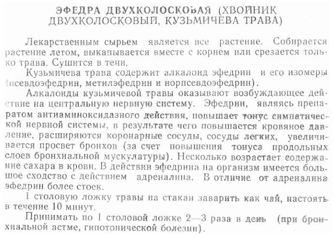 Эфедра двухколосная (хвойник двухколосковый, Кузьмичева трава)
